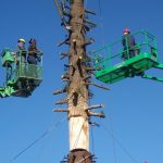 Egan Acres Tree Farm crew installing largest single trunk tree over Six Flags in Vallejo CA