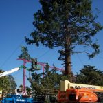 progress picture of the largest Christmas tree installation in Vallejo CA
