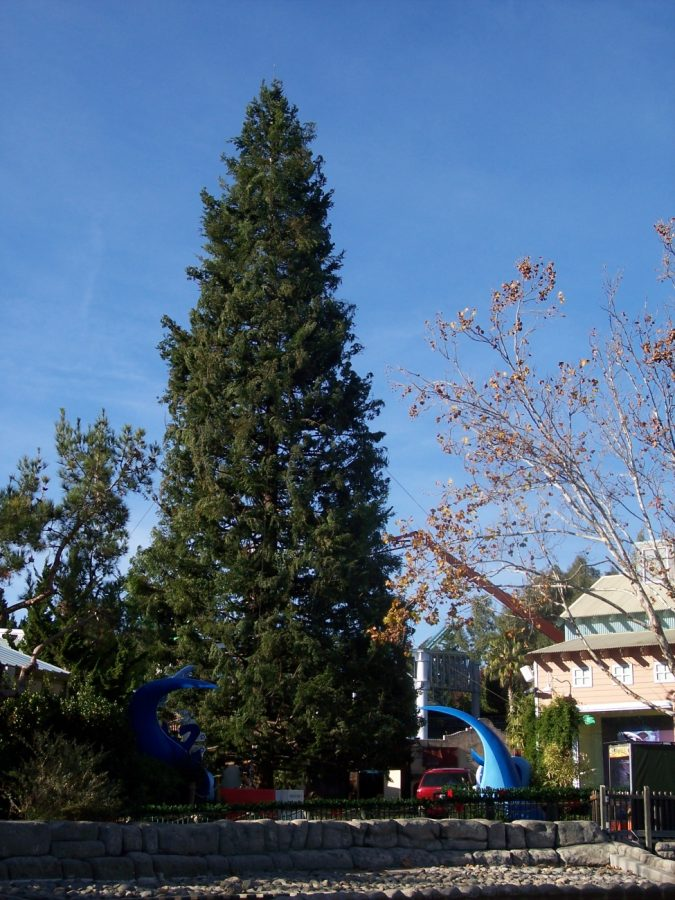 135 ft. tall Christmas tree over Six Flags in Vallejo CA