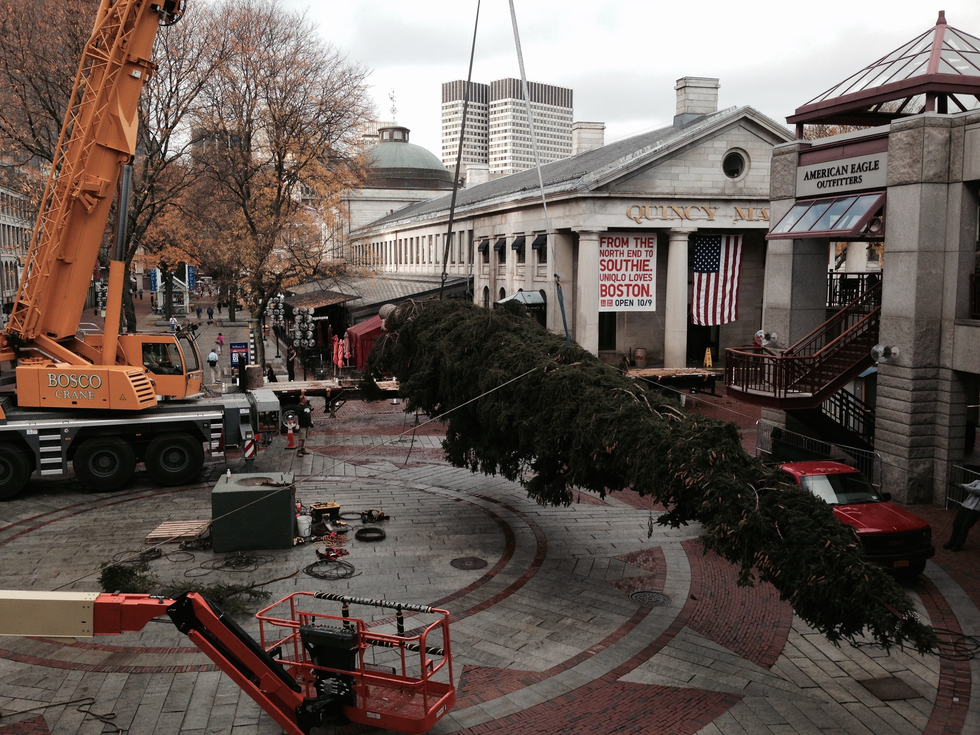 Boston-erecting tied tree