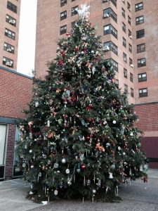 Harlem tree photo