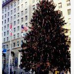 Tall Community Christmas Trees - Egan Acres Tree Farm