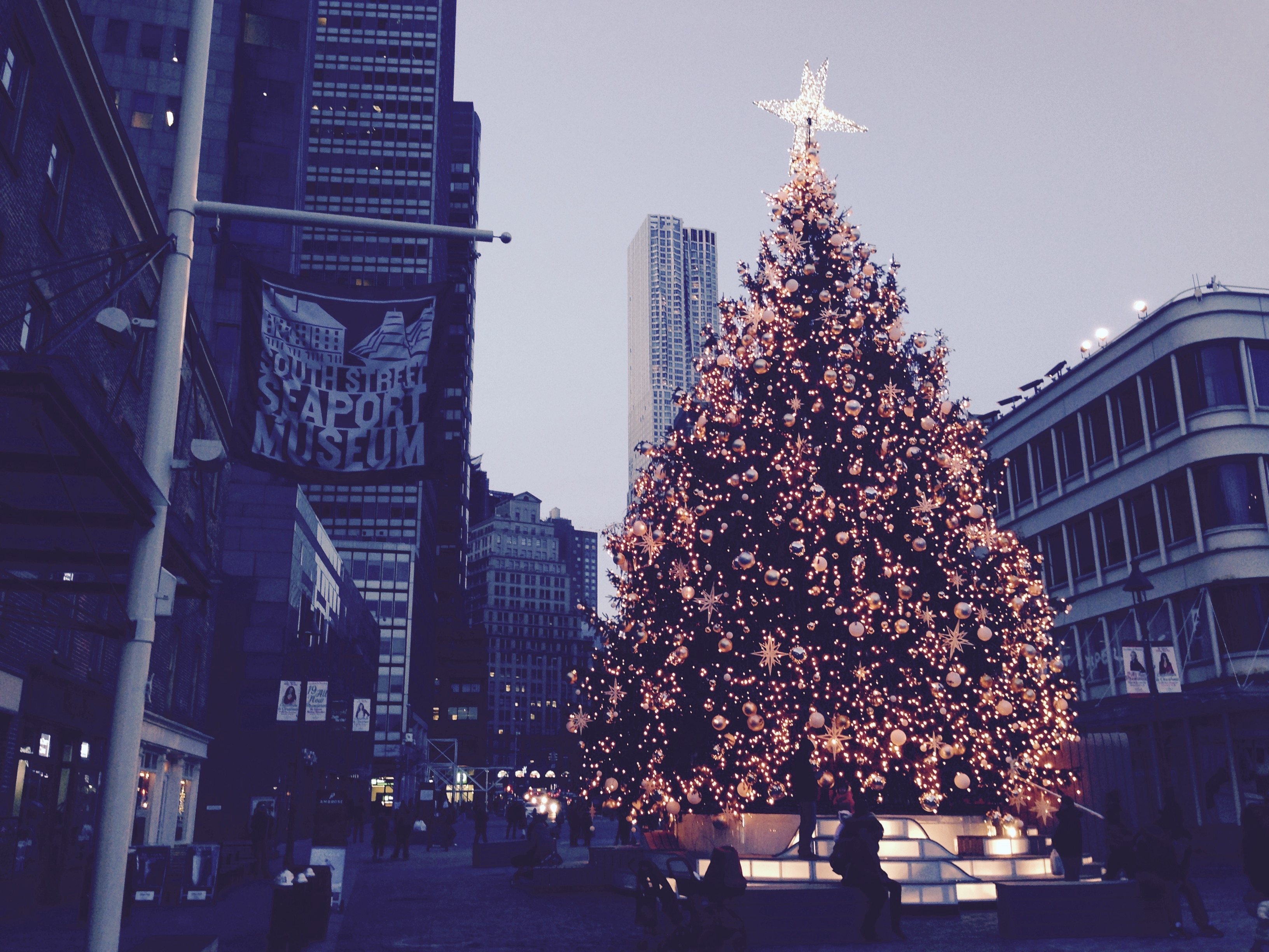 South Street Seaport tree