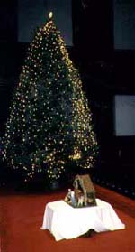 Large Christmas Trees - Egan Acres Tree Farm