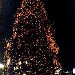 Natural Large Christmas Trees - Egan Acres Tree Farm