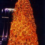 Record Breaking Christmas Trees - Egan Acres Tree Farm