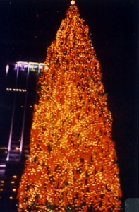 Record Breaking Christmas Trees - Egan Acres Tree Farm