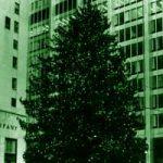 Natural Christmas Trees - Egan Acres Tree Farm
