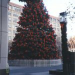 Community Christmas Trees - Egan Acres Tree Farm