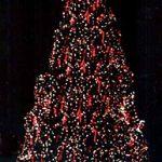 Record Breaking Natural Christmas Trees - Egan Acres Tree Farm
