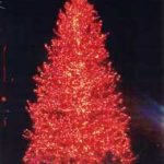 Large Natural Christmas Trees -- Egan Acres Tree Farm