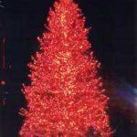 Large Natural Christmas Trees -- Egan Acres Tree Farm