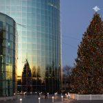 Tall Christmas Tree in Long Island NY from Egan Acres Tree Farm